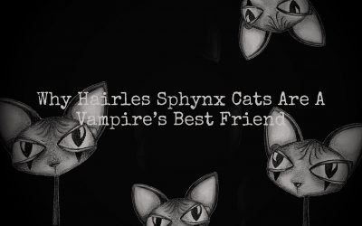 Sphynx Hairless Cats: A Vampire's Best Friend